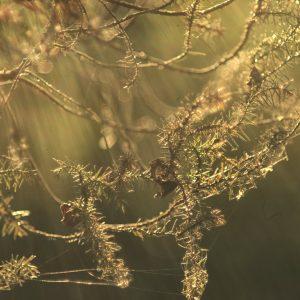 Conifer bits
